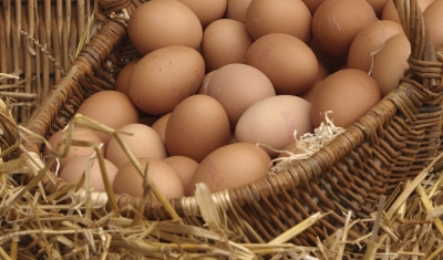 types-of-eggs